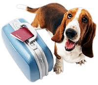 Pet Health Certificates Find where you are traveling to and get information you need.