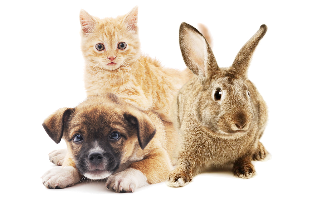 Dogs, Cats, Rabbits and more! at Balboa Pet Hospital