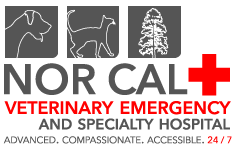 Balboa Pet Hospital recommends Nor Cal Veterinary Emergency