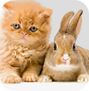 Balboa Pet Hospital San Francisco Veterinarian Services